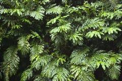 Planta del jengibre en Maui, Hawaii. Fotos de archivo