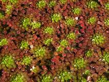 Planta del mosaico Imagen de archivo