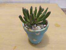 Planta del ornamento Foto de archivo libre de regalías