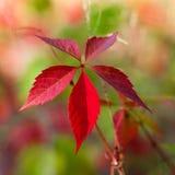 Planta del otoño Imágenes de archivo libres de regalías