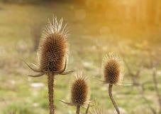 Planta del otoño Fotos de archivo