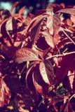 Planta del otoño cerque Foto de archivo libre de regalías