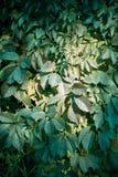 Planta del otoño cerque Imagenes de archivo