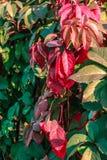 Planta del otoño cerque Fotos de archivo libres de regalías