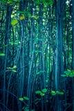 Planta del otoño troncos de árboles en el bosque Imagen de archivo libre de regalías