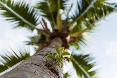 Planta del parásito en una palma Imagen de archivo libre de regalías