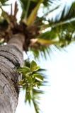 Planta del parásito en una palma Imagenes de archivo