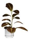 Planta del rezo en blanco Fotos de archivo