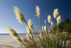 Planta del toi de Toi, playa, Nueva Zelanda. Fotos de archivo