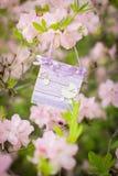 Planta del tomentosum del rododendro del palustre del Ledum de la flor Fondo de flores con la profundidad del campo baja Imagenes de archivo
