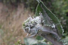 Planta del volcán de Irazu Fotos de archivo