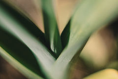 planta: detalhes Imagens de Stock Royalty Free