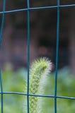 Planta detrás de barras Foto de archivo