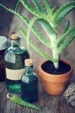 Planta do aloés no vaso de flores, no gel de vera do aloés e nos outros produtos Imagem de Stock