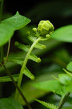 Planta do bebê Imagem de Stock