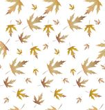 A planta do bordo sae de pattern-01 ilustração royalty free