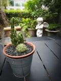Planta do cacto Fotografia de Stock