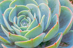 Planta do close-up Imagens de Stock Royalty Free