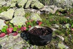 Planta do cordifolia do Bergenia Chá de ervas de acampamento em um potenciômetro fotos de stock