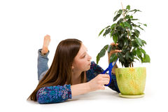 Planta do cuttion da mulher com tesouras azuis Fotografia de Stock