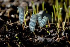 Planta do dólar fotografia de stock