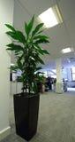 Planta do escritório fotografia de stock royalty free