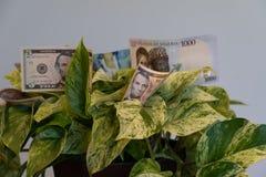 Planta do escritório com as cédulas americanas, nigerianas e canadenses foto de stock royalty free