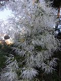 Planta do inverno Fotos de Stock Royalty Free
