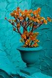 Planta do jade Foto de Stock Royalty Free