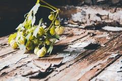 Planta do lúpulo na tabela da pintura da casca Imagens de Stock
