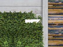 Planta do montanhista e caixa do cargo Fotografia de Stock