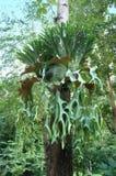 Planta do parasita Fotos de Stock