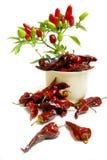 Planta do pimentão Fotografia de Stock Royalty Free