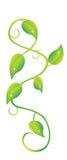 Planta do rastejamento ilustração royalty free