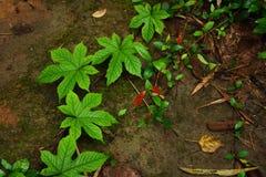 Planta do rastejamento na terra Foto de Stock Royalty Free
