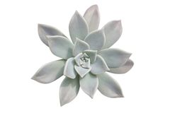 Planta do Succulent Imagem de Stock Royalty Free