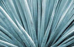 Planta do ventilador Imagem de Stock