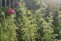 Planta do verão Imagem de Stock Royalty Free