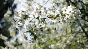 Planta do verão da flor video estoque