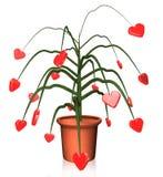 Planta dos corações Fotos de Stock Royalty Free