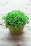 Planta dos rasgos de bebê Fotos de Stock