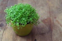 Planta dos rasgos de bebê Imagem de Stock