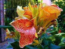 Planta dos trópicos Imagem de Stock Royalty Free