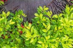 Planta e árvore Fotos de Stock Royalty Free