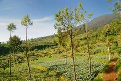 Planta e árvore imagens de stock royalty free