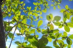 A planta e as hastes da folha com alargamento iluminam-se no céu azul Fotos de Stock Royalty Free