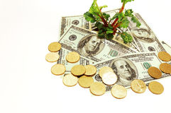 Planta e dinheiro Fotografia de Stock