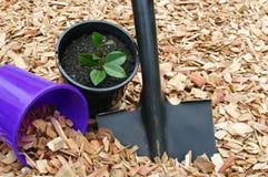 Planta e ferramentas potted do Mulch Fotografia de Stock
