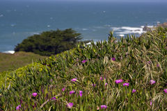 Planta e flores de gelo sobre a vista do oceano Fotografia de Stock Royalty Free
