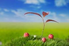 Planta e frutos pequenos no prado Fotos de Stock